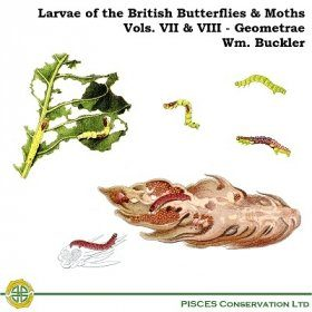 Larvae of the British Butterflies & Moths: Volumes 7 & 8 - The Geometrae