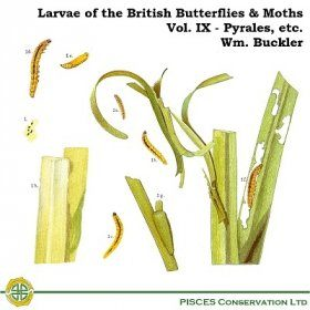 Larvae of the British Butterflies & Moths: Volume 9 - Pyrales, etc.