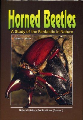 Horned Beetles