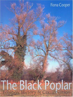 The Black Poplar