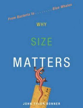 Why Size Matters