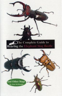 The Complete Guide to Rearing the Elephant Stag Beetle