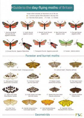 Guide to the Day-flying Moths of Britain