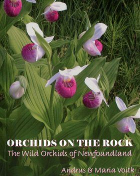 Orchids on the Rock