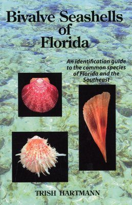 Bivalve Shells of Florida
