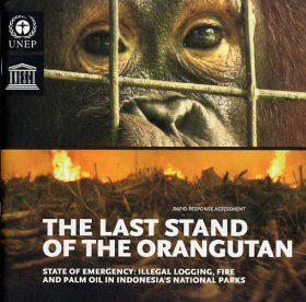 The Last Stand of the Orangutan