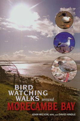 Birdwatching Walks Around Morecambe Bay