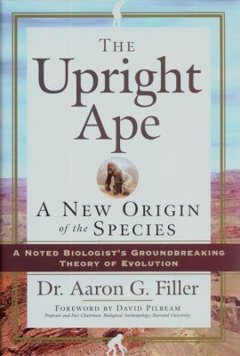 The Upright Ape