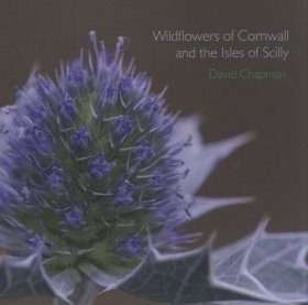 Wildflowers of Cornwall and the Isles of Scilly