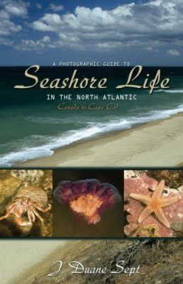 A Photographic Guide to Seashore Life in the North Atlantic