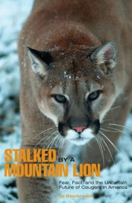 Stalked by a Mountain Lion