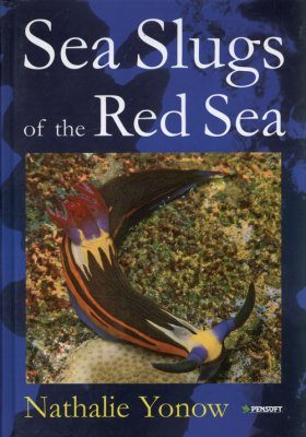 Sea Slugs of the Red Sea