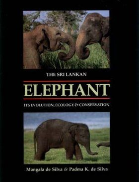 The Sri Lankan Elephant