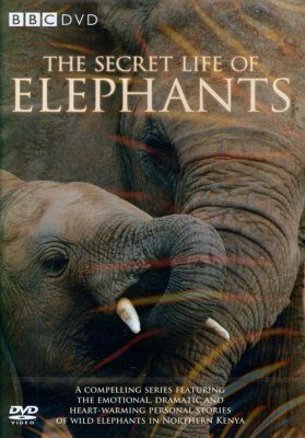 The Secret Life of Elephants - DVD (Region 2)