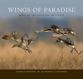 Wings of Paradise