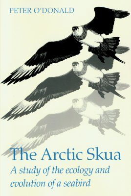 The Arctic Skua