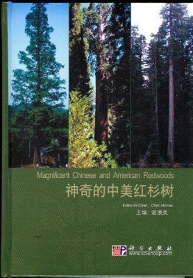 Magnificent Chinese and American Redwoods