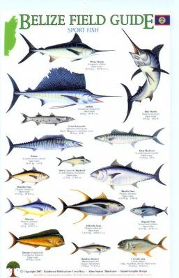 Belize Field Guides: Sport Fish