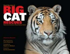 Real Stories of Big Cat Rescues