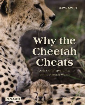 Why the Cheetah Cheats
