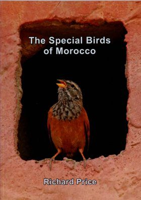 The Special Birds of Morocco