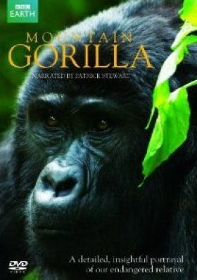 Mountain Gorilla (Region 2)