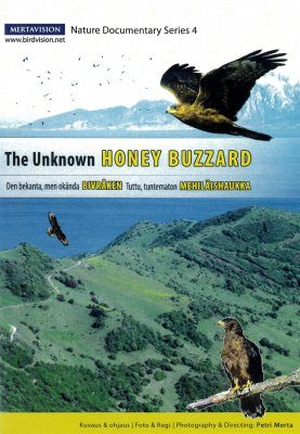 The Unknown Honey Buzzard (All Regions)