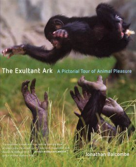 The Exultant Ark