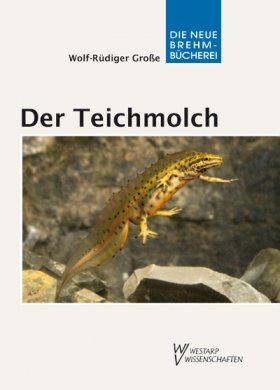 Der Teichmolch (Smooth Newt)