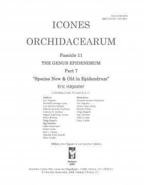 Icones Orchidacearum, Fascicle 11