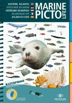 Marine Pictolife Eastern Atlantic [multilingual]