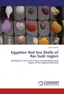 Egyptian Red Sea Shells of Ras Sudr region