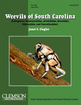 Weevils of South Carolina