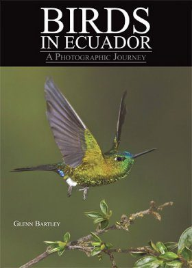Birds in Ecuador