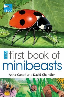 RSPB First Book Of Minibeasts