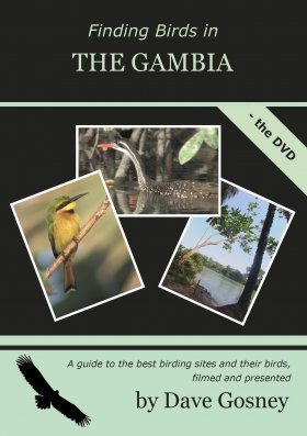 Finding Birds in The Gambia - The DVD (Region 2)