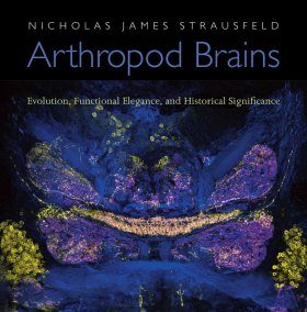 Arthropod Brains