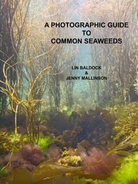 A Photographic Guide to Common Seaweeds
