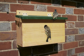 House Sparrow Terrace FSC Nest Box