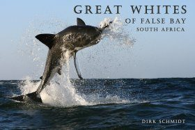 Great Whites of False Bay - South Africa
