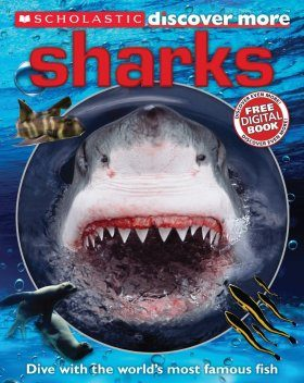 Discover More: Sharks