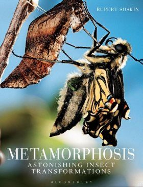 Metamorphosis: Astonishing Insect Transformations