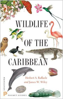 Wildlife of the Caribbean