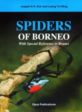 Spiders of Borneo