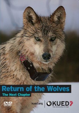 Return of the Wolves: The Next Chapter (Region 1)
