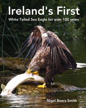 Ireland's First White Tailed Sea Eagle for Over 100 Years