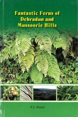 Fantastic Ferns of Dehradun and Mussoorie Hills