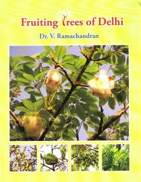 Fruiting Trees of Delhi