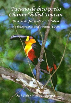 Channel-billed Toucan / Tucano-de-bico-preto
