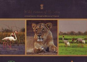 Wild Fauna of Gujarat